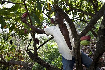 The Grenada Chocolate Company farmer