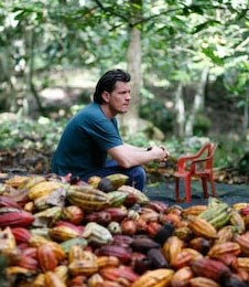 Willies chocolate cocoa harvest